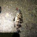 ゲストさんの石川県金沢市での釣果写真