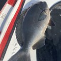 コバちゃんさんの岐阜県での釣果写真