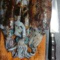 たかひろですわさんの佐賀県唐津市での釣果写真