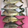小鉄のパパさんの山口県下関市でのギンガメアジの釣果写真