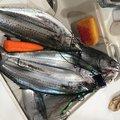 げんさんの新潟県北蒲原郡での釣果写真