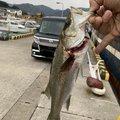 Ryo tさんの福岡県北九州市でのスズキの釣果写真