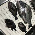 りーチョスさんの秋田県での釣果写真