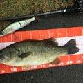 にゃんてぃ〜さんの岐阜県岐阜市での釣果写真