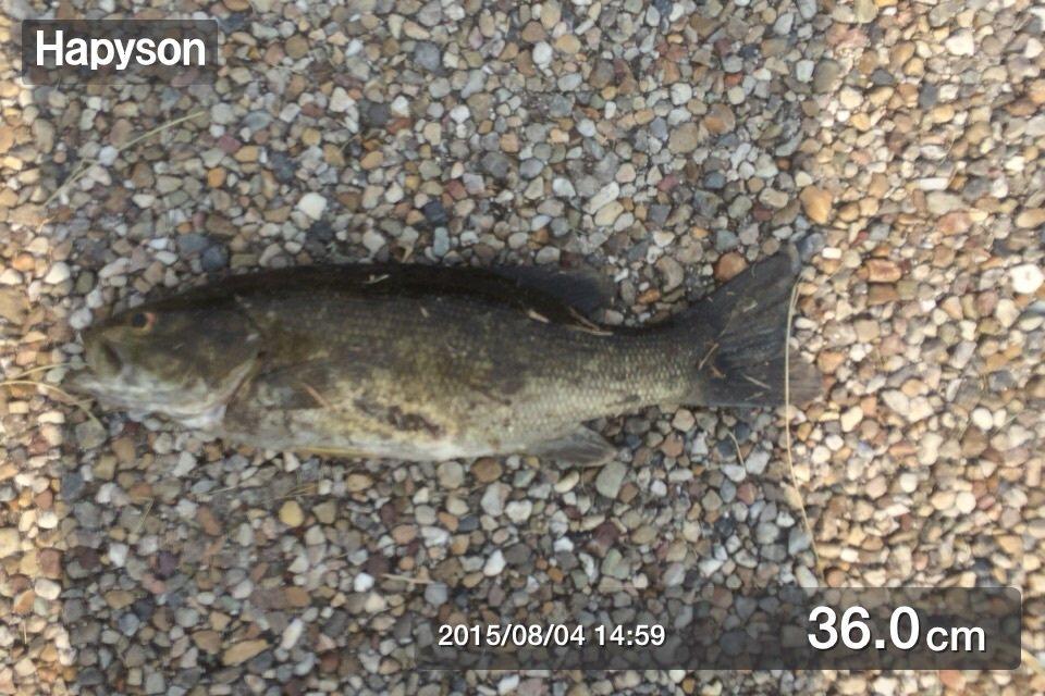 リョウさんの投稿画像,写っている魚はスモールマウスバス