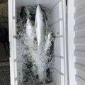 ミッチーさんの石川県金沢市での釣果写真