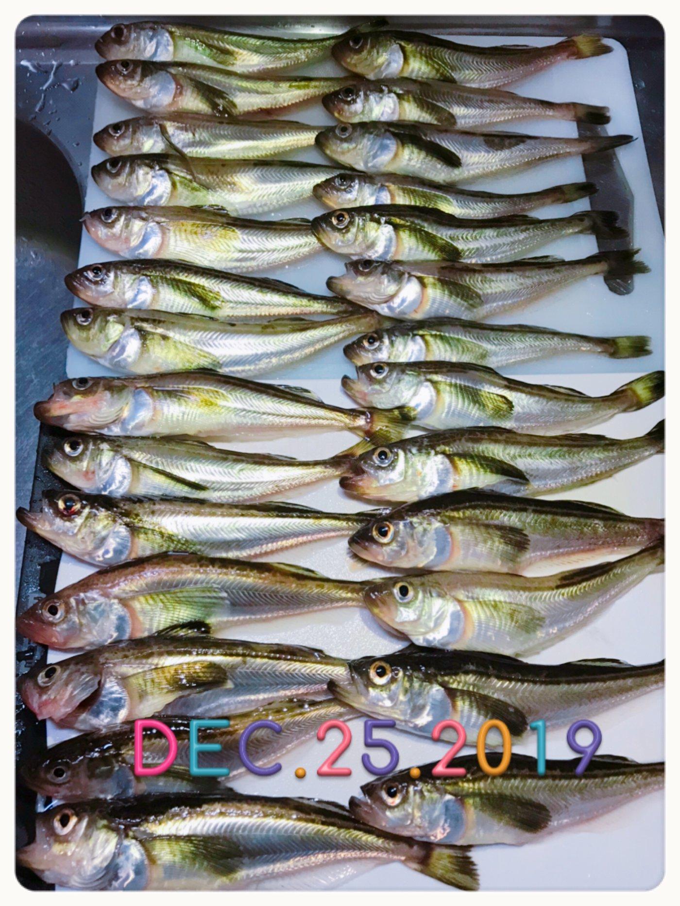 釣り 2019 ハタハタ