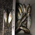 YOSHIPONさんの山口県下松市での釣果写真