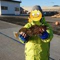 ふっきさんの岩手県陸前高田市での釣果写真