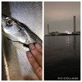 だーよしさんの神奈川県でのタチウオの釣果写真