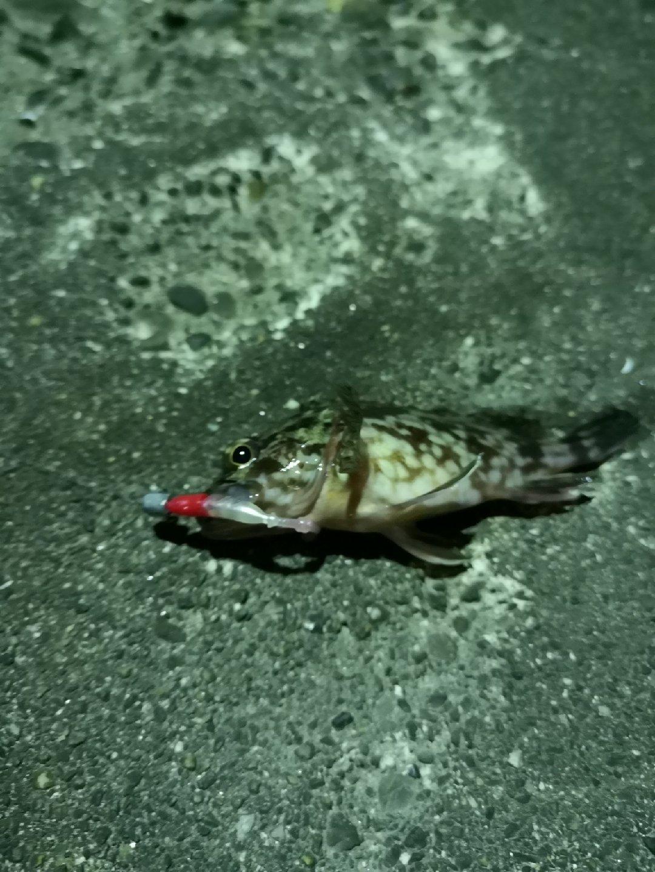 たるけさんの投稿画像,写っている魚は,