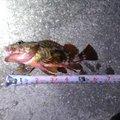 nodakenさんの愛媛県松山市での釣果写真