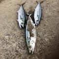 HIRO.Yさんの新潟県北蒲原郡での釣果写真