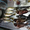 かずさんの愛媛県松山市での釣果写真