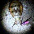 ユリさんの広島県尾道市でのアオリイカの釣果写真