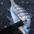 Kazukuさんの新潟県北蒲原郡での釣果写真