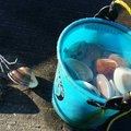 シンジさんの茨城県東茨城郡での釣果写真