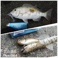 お子茶丸 さんの沖縄県でのフエフキダイの釣果写真