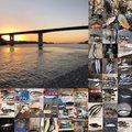 さかもとっぷけい 2019さんの神奈川県横須賀市での釣果写真