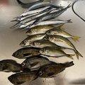 ろっつさんの山口県大島郡でのアジの釣果写真