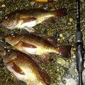 有頂天一号さんの和歌山県新宮市での釣果写真