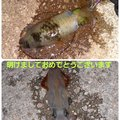 Tamago さんの佐賀県での釣果写真
