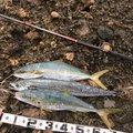 デコッパチさんの石川県かほく市での釣果写真