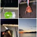 ムーさんのマダコの釣果写真