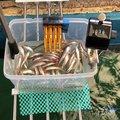 ゆうCANさんの福島県耶麻郡での釣果写真