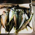 nはらさんの佐賀県での釣果写真