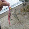シンジさんの千葉県いすみ市での釣果写真