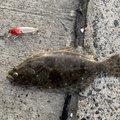 コメコメさんの茨城県神栖市での釣果写真