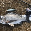 moritoshiさんの福井県での釣果写真