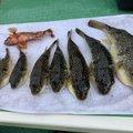 よーすけ。さんの神奈川県横須賀市での釣果写真