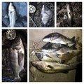 赤眼のあきと(REV)さんの千葉県習志野市での釣果写真