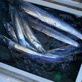 ゲゲゲのさんの茨城県東茨城郡での釣果写真