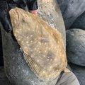 かけちんさんの福岡県糸島市でのスズキの釣果写真