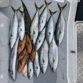影竿さんの佐賀県での釣果写真