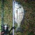 孤高の南国アングラーさんの山口県大島郡での釣果写真