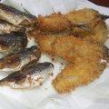 tomo48さんの佐賀県での釣果写真
