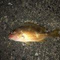 海坊主さんの宮崎県での釣果写真
