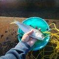 ジョニーさんの愛媛県西条市での釣果写真