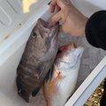 エソさんの宮崎県での釣果写真