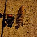 ぷーーさんの岡山県での釣果写真