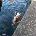 サカやんさんの徳島県での釣果写真