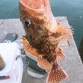カルロスさんの福井県での釣果写真