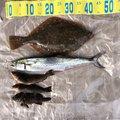 きのこさんの新潟県北蒲原郡での釣果写真