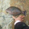 見習い釣り師さんの高知県安芸市での釣果写真