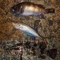 そらさんの石川県金沢市での釣果写真