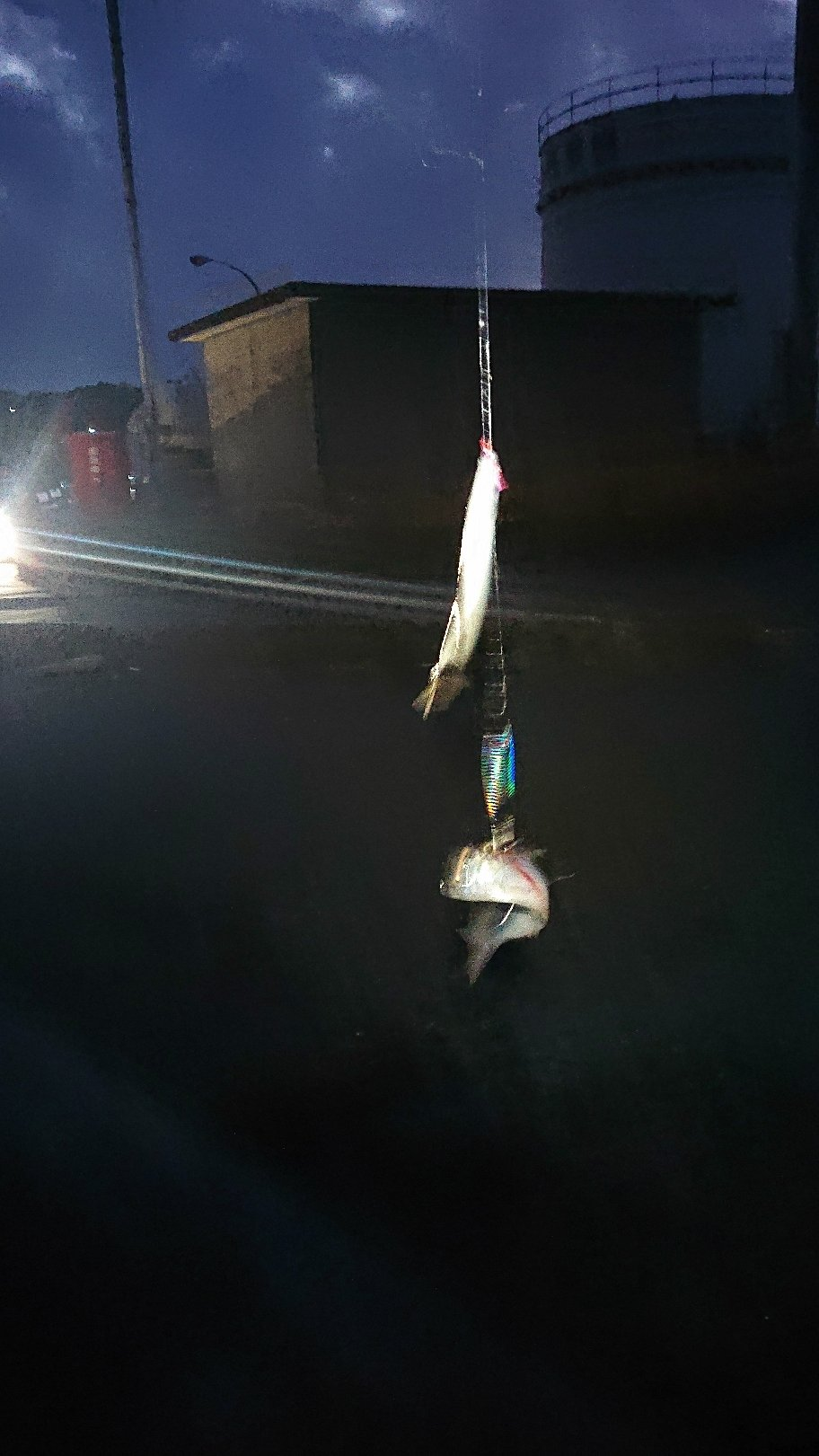 Pokharaさんの投稿画像,写っている魚はコノシロ